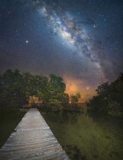 Manglar en Isla Múcura - Joseph Hernandez