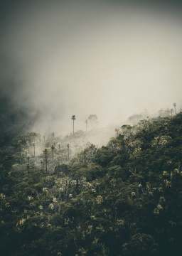 Bosque de frailejones - Joseph Hernandez